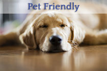 Featured Pet Friendly